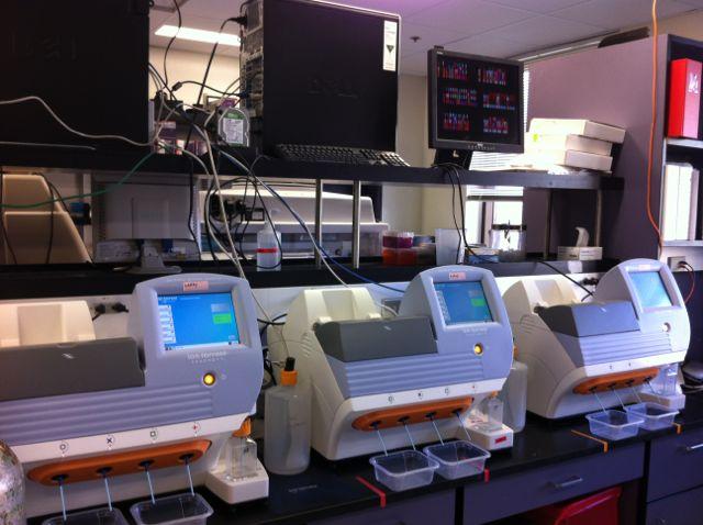 Molecular Genetics Amp Microbiology Molecular Genetics